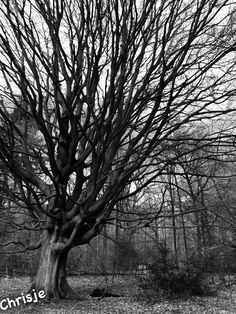 Black & White Photo by Chrisje!