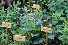 bylinky na zahradě - Hledat Googlem