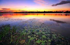 Rumbai Lake, Pekanbaru, Indonesia.