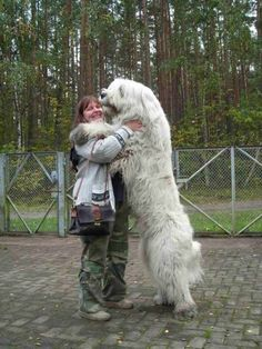 Top 7 Strangest Caucasian Mountain Dog Facts