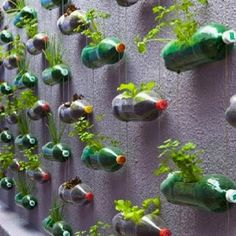 If you are thinking of a nice, sustainable way of recycling plastic bottles, you could get your inspiration from this big vertical garden made using recycled soda bottles. Created as… Reuse Plastic Bottles, Recycled Bottles, Water Bottle Recycling, Plastic Jugs, Plastic Bottle Crafts, Recycled Glass, Bottle Garden, Bottle Plant, Bottle Terrarium