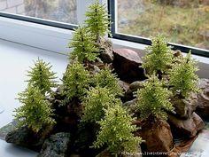 Graceful alpine fir trees with their hands