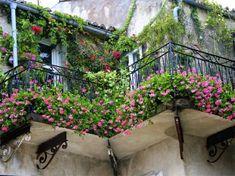 balcon fleuri avec brise-vue naturel en plantes à fleurs