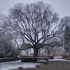 #snow #winter #centenarytree #beautifulcastle #kingofthegarden #charmingbedandbreakfast #luxuryholiday #weddingvenue #weddingplanner #tuscany wedding_in_tuscany # Sienacountryside #cretesenesi #igerstuscany #igersiena #picoftheday