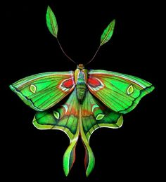 luna moth with psychedelic colors