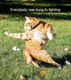 41 SNAPCHATS Of Snappy Cats   CutesyPooh