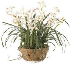 Orchid (WF002): FINAL SALE ITEM | Cymbidium Orchid Terracotta
