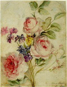 Dibujo María Moser Botánico 1769-1793