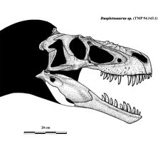Skull rec of daspletosaurus sp by Dinomaniac