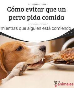 Cómo evitar que un perro pida comida -Mejor con Mascotas  ¿Tu perro es de los que pide constantemente comida cuando estás cenando? Si no sabes cómo modificar este comportamiento, te lo contamos a continuación.
