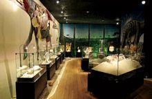 """""""Museu dos Dinossauros"""". Museu de Paleontologia de Peirópolis, Uberaba - Minas Gerais. BR 262, Km 784, Bairro de Peirópolis. Centro de Pesquisas Paleontológicas """"Llewellyn Ivor Price"""""""