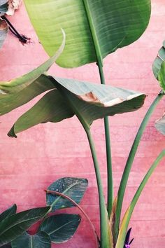 tropical plants against a tropic pink wall :)
