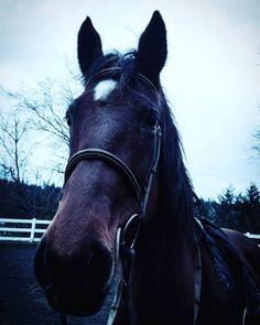 The cold must end! #horse #horses #horseoftheday...