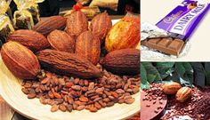 Small Business Ideas | List Of Small Business Ideas: How to Start a Cocoa Farming Business | Starting a Cocoa Farm