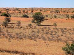 10 Surprising Kalahari Desert Facts