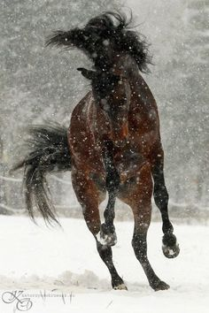 Horse Dancing in the snow