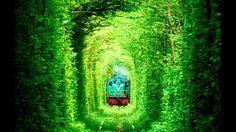 皆さんはウクライナにある「恋のトンネル」と言われる場所をご存知ですか。幸せのジンクス付きスポットでもあることから世界中から多くの人が訪れるまさに名所。映画『クレヴァニ、愛のトンネル』の撮影場所として有名になったというこの地を今回はご紹介します。