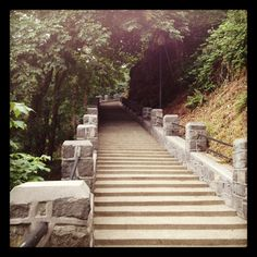 ~n~ *These* aren't just another set of stairs.  These stairs are home.  These shallow steps scale the bluff of Oregon City, in a sweet little tranquil spot,  a part of my running route, and sometimes the long way home from the bus stop.