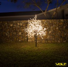 Find the Perfect Landscape Lighting Design for Your Backyard Patio Lighting, Tree Lighting, Landscape Lighting Design, Christmas Landscape, Shades Of Gold, Yard Landscaping, Christmas Tree Decorations, Backyard, House Design
