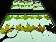 Investigating autumn leaves on the light panel