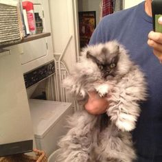 "Colonel Meow looks like a normal cat stuffed into an ""abominable snowman"" costume!"
