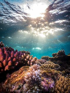 Coral Reef Sunrise Great Barrier Reef by DarkRoomTreasuresYou can find Coral reefs and more on our website.Coral Reef Sunrise Great Barrier Reef by DarkRoomTreasures Fishing Photography, Underwater Photography, Nature Photography, Photography Tips, Marine Photography, Photography Couples, Wedding Photography, Street Photography, Landscape Photography