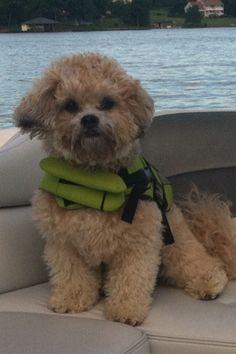 On the Boat! #schichon