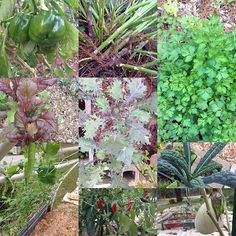 the garden.. #follow #florida #garden #thenewleafproject #nature #instadaily #instagood #instainfo #organic #harvest #healthy #grow