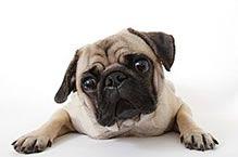 CUIDADO DE SUS MASCOTAS                                  COMUNIDAD DEFENDEMOS A LOS ANIMALES GOOGLE+   clic en LA FOTO para leerlo