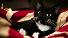 Фото: Усы, лапы, хвост: забавные животные из ВК, которые развеселят