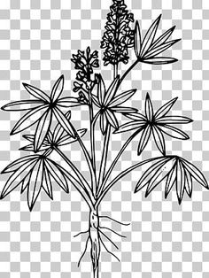 Black And White Leaves, White Leaf, Black White, Outline Drawings, Art Drawings, Flower Png Images, Drawing Clipart, Design Seeds, Egyptian Art
