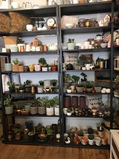 Succulent Bar at Car