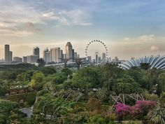 Gardens by the Bay. #Singapore #travelasia