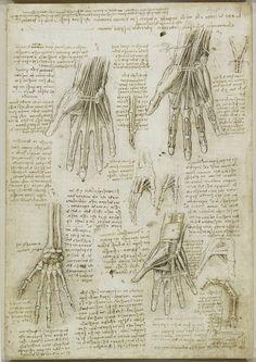 Sketches of the anatomy of the Hand, Leonardo da Vinci, c1510.