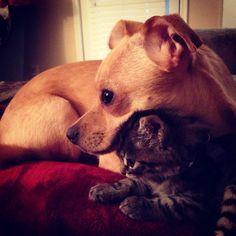 Puppy/kitten love