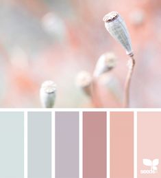 Likes, 20 Comments - Design Seeds® Colour Pallette, Colour Schemes, Color Combos, Design Seeds, Color Balance, Colour Board, Color Swatches, Color Theory, Color Inspiration