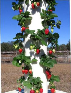 Start your own farmers market in your backyard!  The tower garden is great to grow fruits, veggies, herbs, and flowers!!