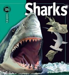 Sharks (Insiders (Simon and Schuster)): Amazon.co.uk: Beverly McMillan, John A. Musick: 9781416938675: Books