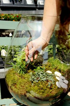 how to put together a terrarium