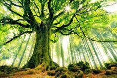 Trädet sjunger solens lov. Meditera är lyckaträning.