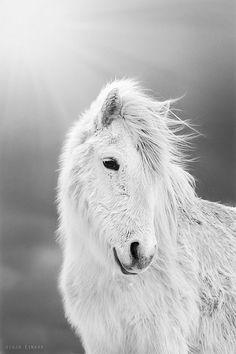 photo: Gijga Einers   horse