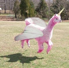 SO Llamazing!  A rare sighting of the pink llamacorn!
