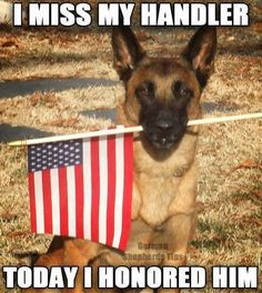 """hero dog From your friends at phoenix dog in home dog training""""k9katelynn"""" see more about Scottsdale dog training at k9katelynn.com! Pinterest with over 20,100 followers! Google plus with over 136,000 views! You tube with over 400 videos and 50,000 views!! Serving the valley for 11 plus years"""