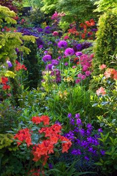 Plant & color variety mixed with junipers