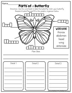 Parts of a Butterfly!   TONS of fun and effective printables for K-2!