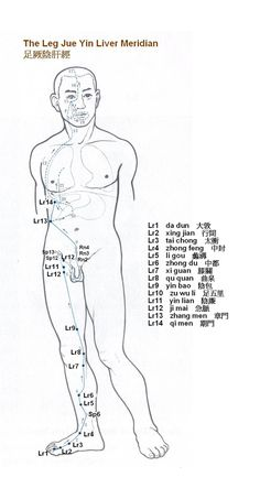 126 Best Meridian Charts Images Acupuncture Points Traditional