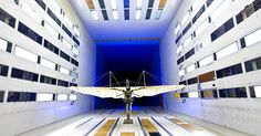 One of the World's First Aircraft Comes Back to Life (Bowtie Included) #iNewsPhoto