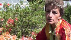 """Рододендроны Как добиться пышного цветения. Сайт """"Садовый мир"""""""" Сады На Открытом Воздухе, Цветы, Стиль"""
