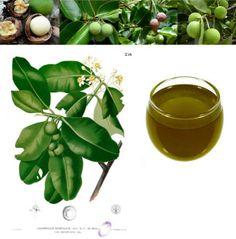 Tamanu or Foraha Oil