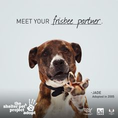 Say hi to Jade, one of the real-life adopted pets featured in our new public service ad campaign!